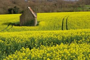 Généraliser une agriculture écologique (8)