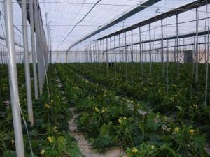 Généraliser une agriculture écologique (9)