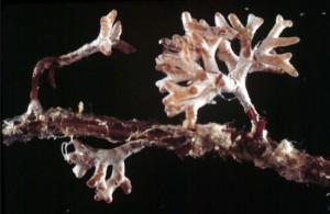 Mycorhizes (4)