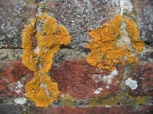 Mycorhizes (5)