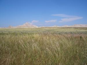 prairies permanentes pousset (2)