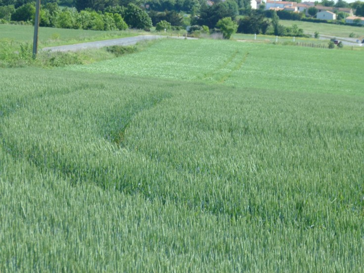 prairies permanentes pousset (3)