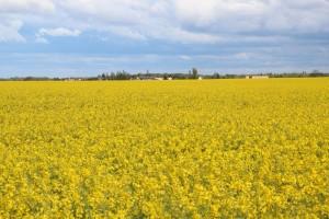 prairies permanentes pousset (4)