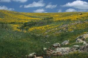 prairies permanentes pousset (5)