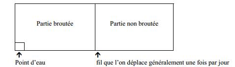 paturages (4)