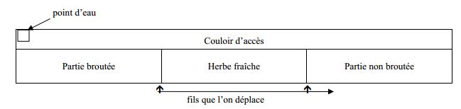 paturages (5)