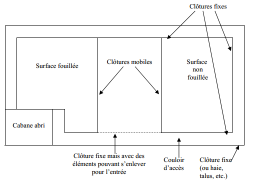 culture biologique du topinambourg permaculture (3)