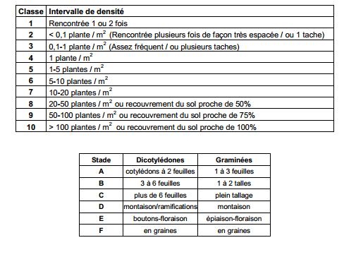 Guide des mauvaises herbes permaculteurs (3)