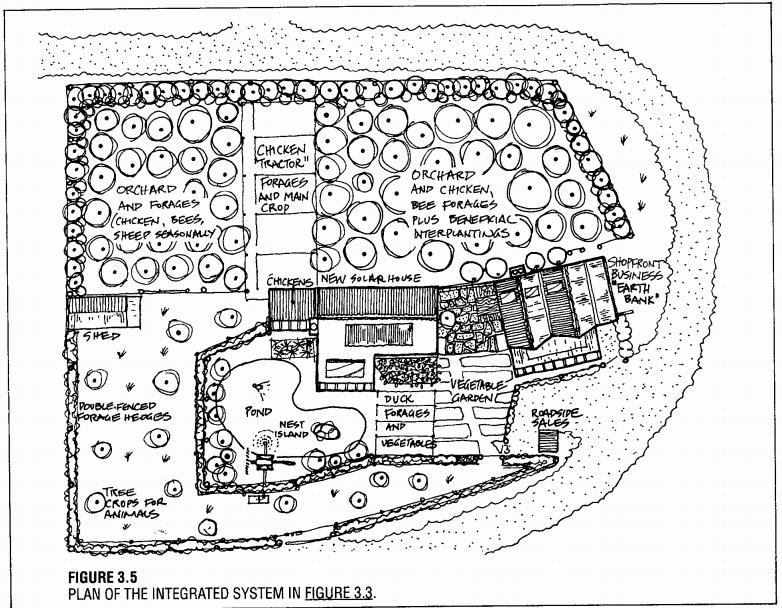 permaculture design (5)