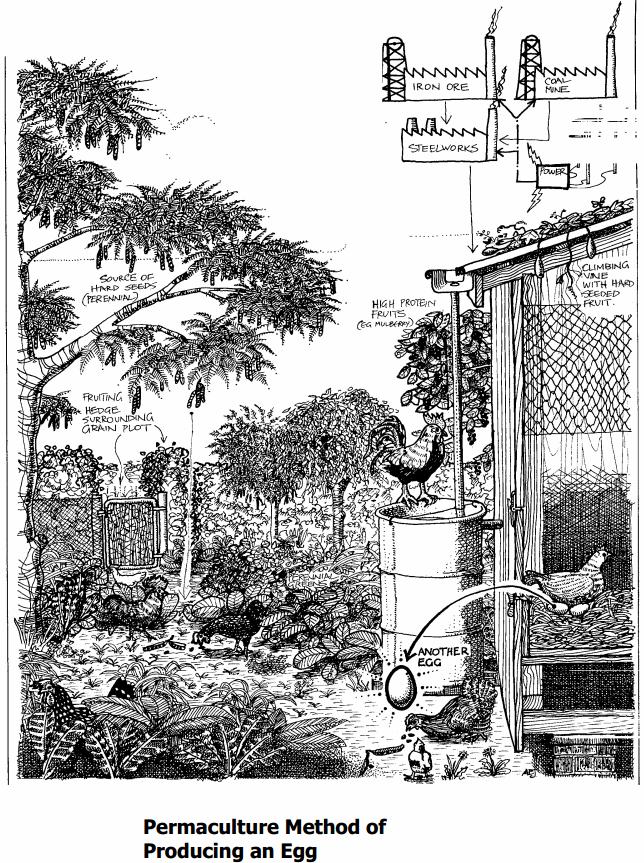 permaculture design (7)
