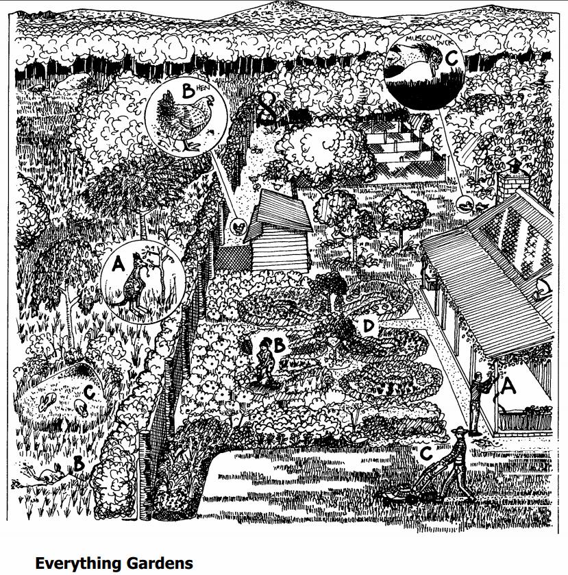 permaculture design (9)