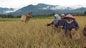 nourrir les peuples permaculture