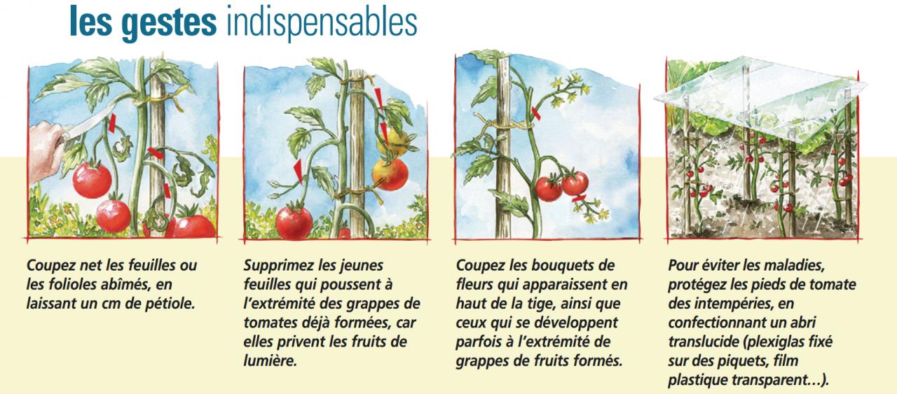 l'été indien des tomates permaculteurs (1)