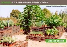 symbiose-potager