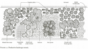 © Edible forest gardens, Chelsea Green Publishing Company, Dave Jacke and Eric Toensmeier, 2005