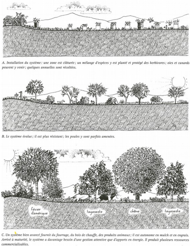 © Introduction à la permaculture, Passerelle Éco, Bill Mollison, 2012