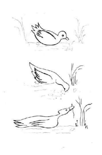 la voie de la permaculture (14)