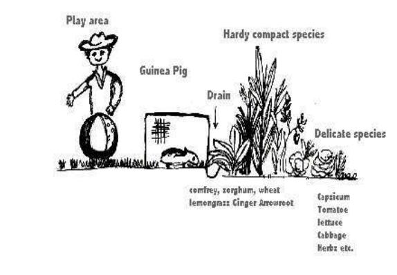 la voie de la permaculture (24)