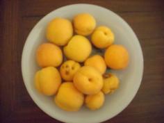Récolte Abricots 2015