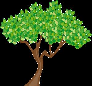 taille des arbres (1)