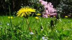 meadow-43467_1280