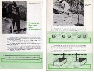 Haie de pommiers semi-vigoureuse - B. Thomasjpg_Page4_Image1