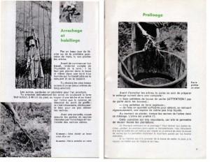 Haie de pommiers semi-vigoureuse - B. Thomasjpg_Page5_Image1