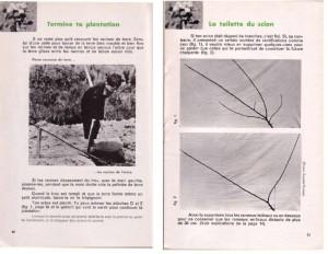 Haie de pommiers semi-vigoureuse - B. Thomasjpg_Page7_Image1