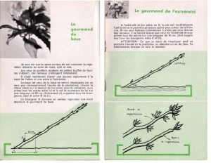 Haie de pommiers semi-vigoureuse - B. Thomasjpg_Page8_Image1