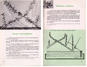 Haie de pommiers semi-vigoureuse - B. Thomasjpg_Page9_Image1