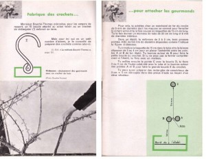 Haie de pommiers semi-vigoureuse - B. Thomasjpg_Page10_Image1