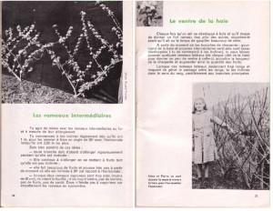 Haie de pommiers semi-vigoureuse - B. Thomasjpg_Page12_Image1