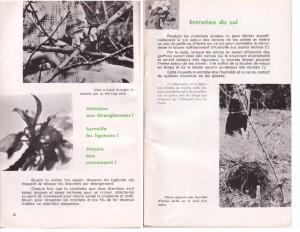 Haie de pommiers semi-vigoureuse - B. Thomasjpg_Page13_Image1