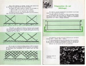 Haie de pommiers semi-vigoureuse - B. Thomasjpg_Page3_Image1