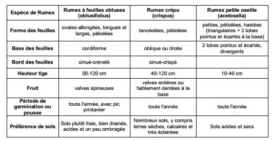 Guide des mauvaises herbes permaculteurs (11)