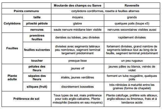 Guide des mauvaises herbes permaculteurs (33)