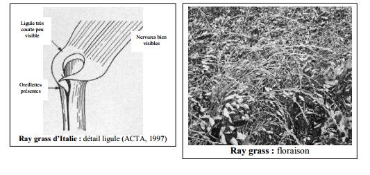 Guide des mauvaises herbes permaculteurs (45)