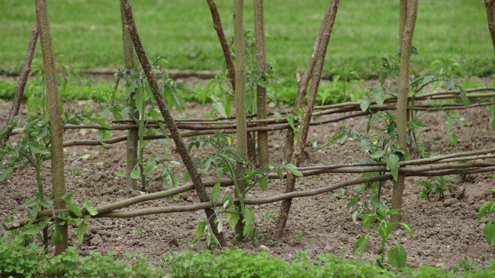Assez TUTORIEL : Des tuteurs faits maison pour vos tomates - Permaculture IT97