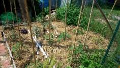 Jardin en agroécologie 2015