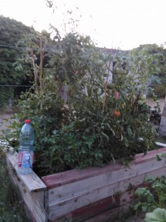 Bac de permaculture