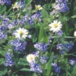 jardiner sans pesticidesjpg_Page7_Image2