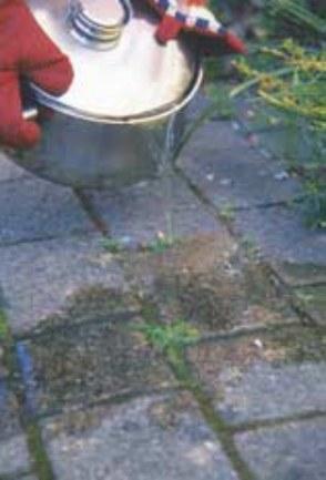 jardiner sans pesticidesjpg_Page9_Image2