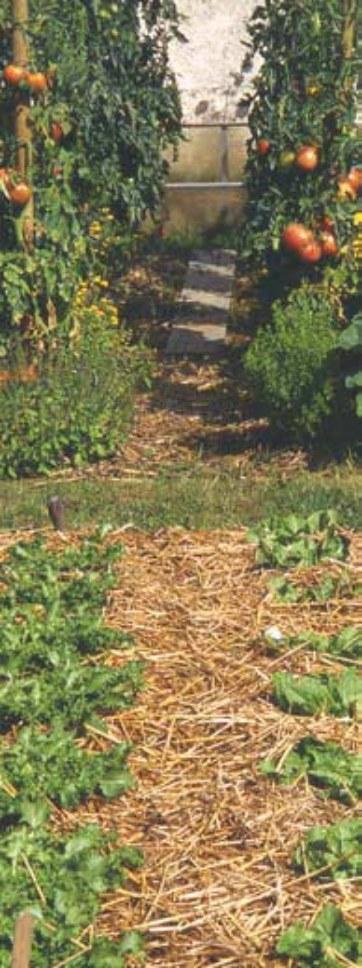 jardiner sans pesticidesjpg_Page14_Image2