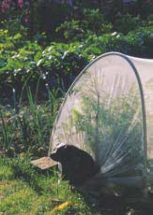 Voile Anti-insectes