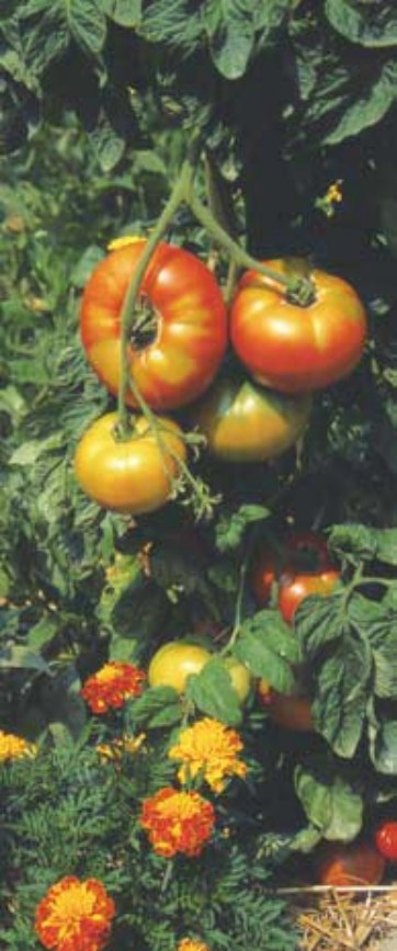 jardiner sans pesticidesjpg_Page21_Image2