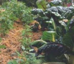 jardiner sans pesticidesjpg_Page26_Image5