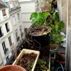 Mon balcon à l'abandon #2