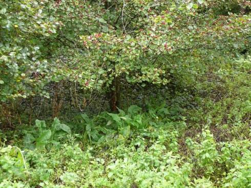 Exemple de jardin forêt