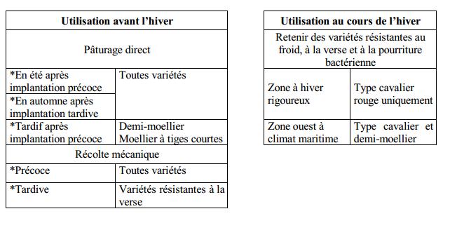 le chou fourrager (3)