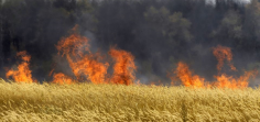 Hungary-Burns-Monsanto-Crops-720x340